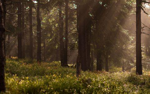 Wald Portfolio PEFC